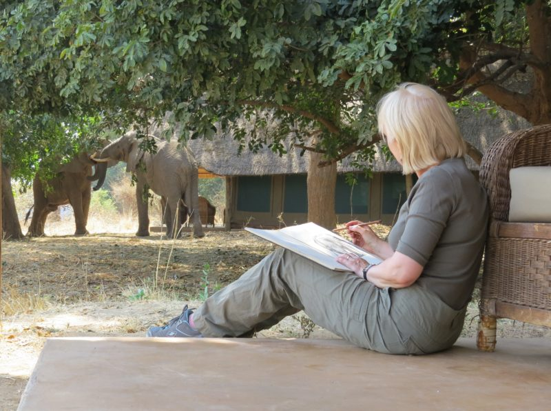 sketching-young-bull-elephant-from-camp
