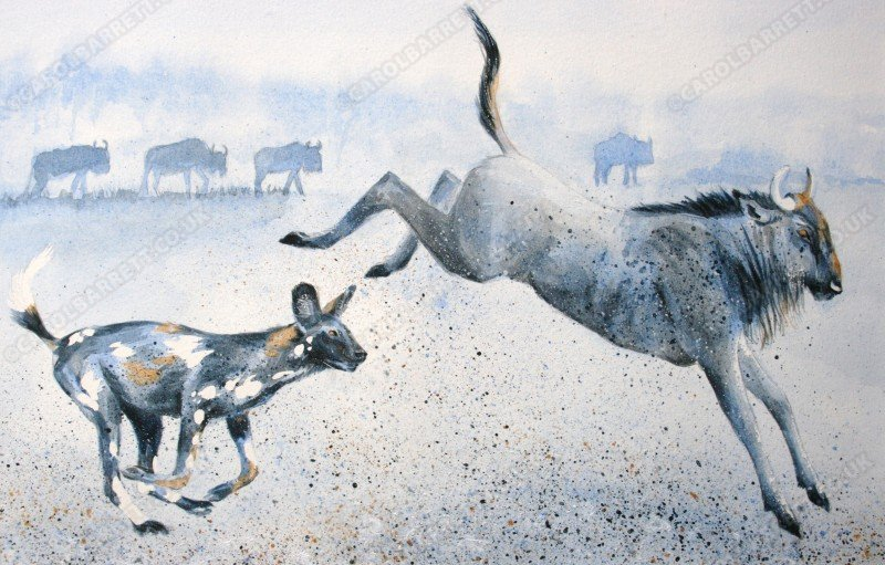 "<span style=""float:left"">The Chase (wild dog & wildebeest)</span> <span style=""float:right""><a href=""http://www.carolbarrett.co.uk/paintings/the-chase-wild-dog-wildebeast/?from=/wild-dog-hyena-for-sale/"">More info »</a></span>"