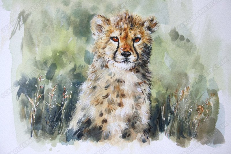 """<span style=""""float:left"""">Kit</span><span style=""""float:right""""><a href=""""http://www.carolbarrett.co.uk/paintings/kit/?from=/cheetah-sold/"""">More info »</a></span>"""