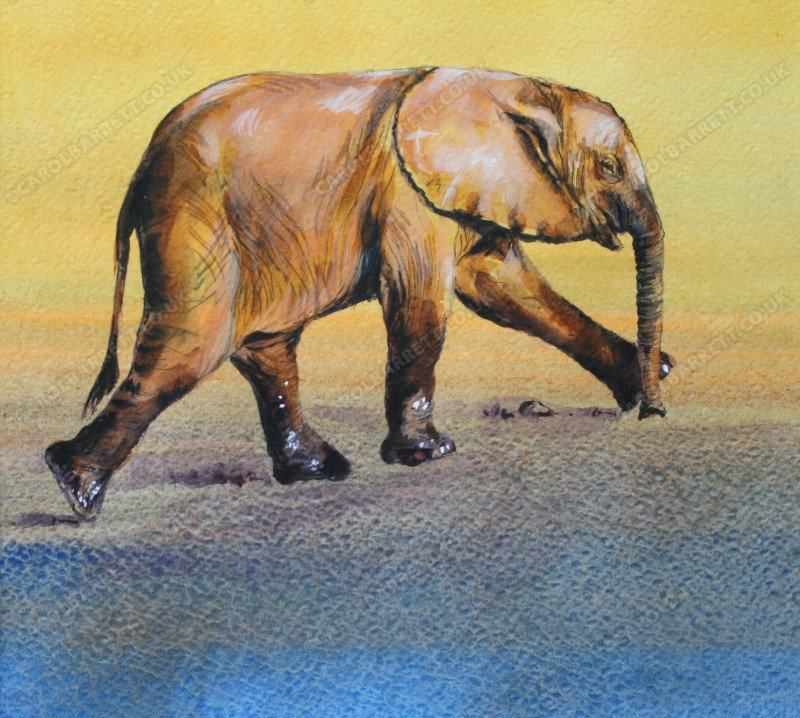 """<span style=""""float:left"""">Muddy feet – Baby elephant</span><span style=""""float:right""""><a href=""""http://www.carolbarrett.co.uk/paintings/muddy-feet-baby-elephant/?from=/elephants-for-sale/"""">More info »</a></span>"""