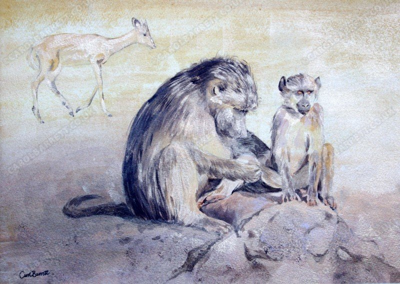 "<span style=""float:left"">Mutual Interest (Impala with Chacma baboon)</span> <span style=""float:right""><a href=""http://www.carolbarrett.co.uk/paintings/mutual-interest-impala-with-chacma-baboon-3/?from=/primates-for-sale/"">More info »</a></span>"
