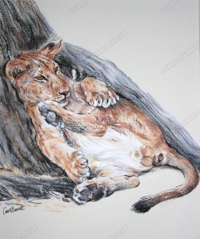 "<span style=""float:left"">All Paws</span> <span style=""float:right""><a href=""http://www.carolbarrett.co.uk/paintings/all-paws/?from=/big-cats-sold/"">More info »</a></span>"