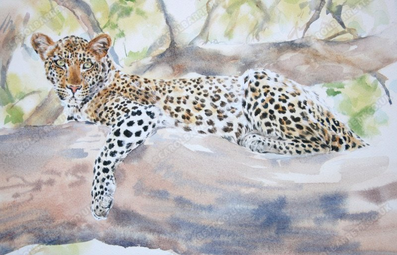 "<span style=""float:left"">Azania</span> <span style=""float:right""><a href=""http://www.carolbarrett.co.uk/paintings/azania/?from=/big-cats-sold/"">More info »</a></span>"