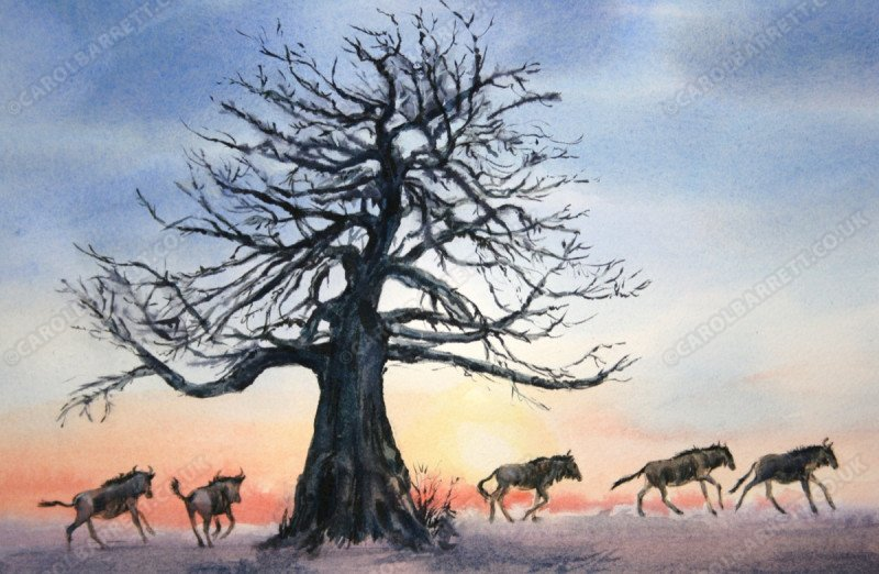 """<span style=""""float:left"""">Baobab trail</span><span style=""""float:right""""><a href=""""http://www.carolbarrett.co.uk/paintings/baobab-trail/?from=/african-wildlife-sold/"""">More info »</a></span>"""