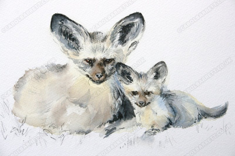 """<span style=""""float:left"""">Bat-eared Fox</span><span style=""""float:right""""><a href=""""http://www.carolbarrett.co.uk/paintings/bat-eared-fox/?from=/african-wildlife-sold/"""">More info »</a></span>"""