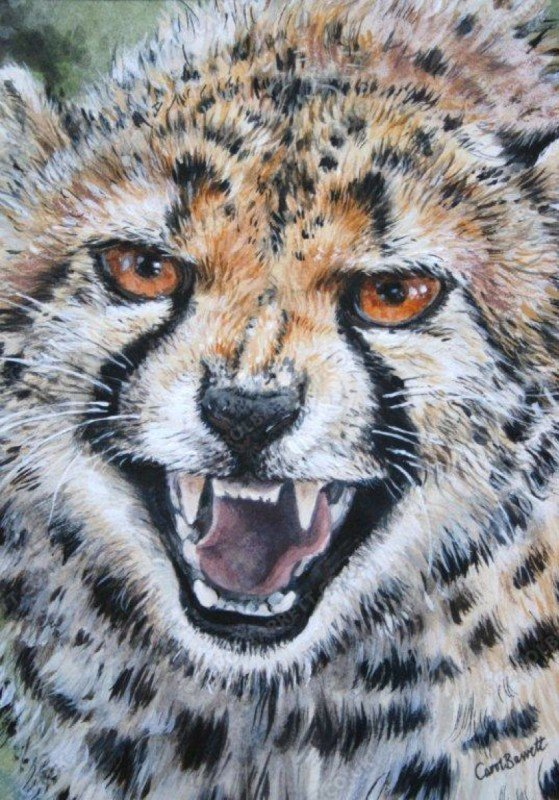 "<span style=""float:left"">Cheetah snarl</span> <span style=""float:right""><a href=""http://www.carolbarrett.co.uk/paintings/cheetah-snarl/?from=/cheetah-sold/"">More info »</a></span>"