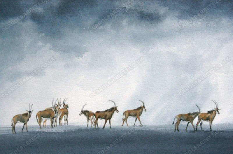 """<span style=""""float:left"""">Clouds of Mercy ~ Selected for 2012 Wildlife Artist of the Year</span><span style=""""float:right""""><a href=""""http://www.carolbarrett.co.uk/paintings/clouds-of-mercy-selected-for-2012-wildlife-artist-of-the-year/?from=/african-wildlife-sold/"""">More info »</a></span>"""