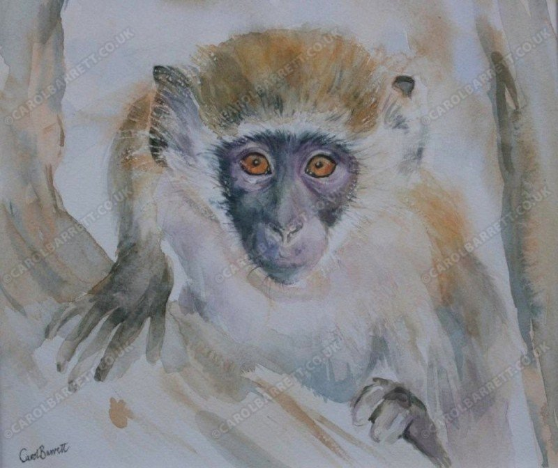 "<span style=""float:left"">Curious – Vervet monkey</span> <span style=""float:right""><a href=""http://www.carolbarrett.co.uk/paintings/curious-vervet-monkey/?from=/primates-sold/"">More info »</a></span>"