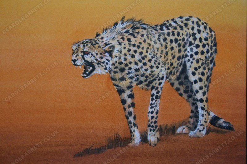 """<span style=""""float:left"""">Defiant</span><span style=""""float:right""""><a href=""""http://www.carolbarrett.co.uk/paintings/defiant/?from=/cheetah-sold/"""">More info »</a></span>"""