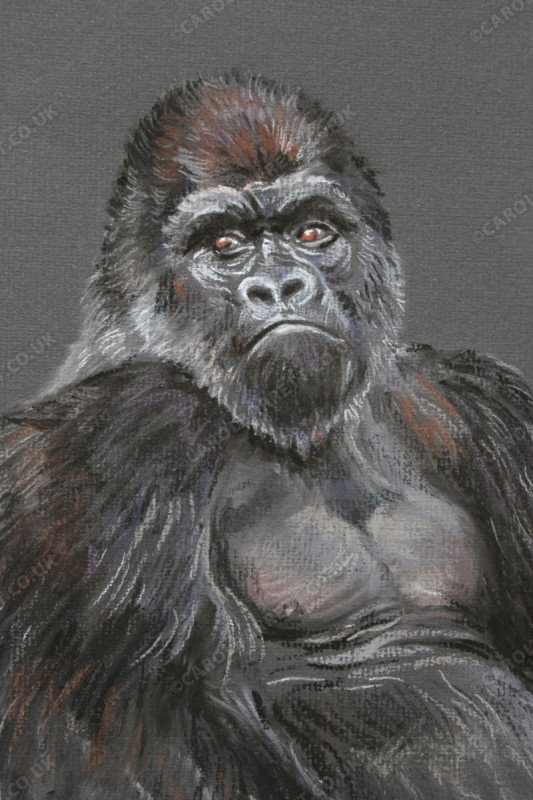 "<span style=""float:left"">Dominant Stare (silverback)</span> <span style=""float:right""><a href=""http://www.carolbarrett.co.uk/paintings/dominant-stare-silverback/?from=/primates-sold/"">More info »</a></span>"