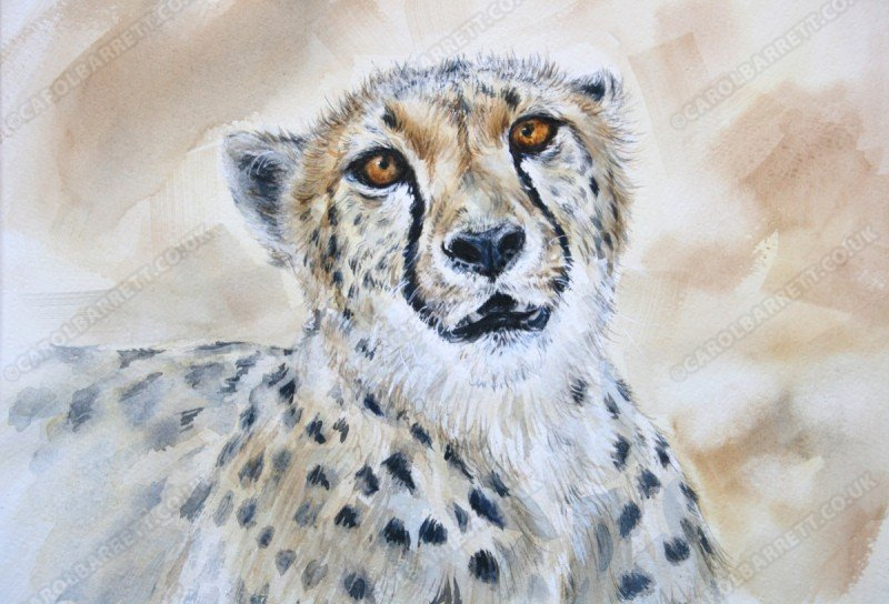 """<span style=""""float:left"""">Dume</span><span style=""""float:right""""><a href=""""http://www.carolbarrett.co.uk/paintings/dume/?from=/cheetah-sold/"""">More info »</a></span>"""