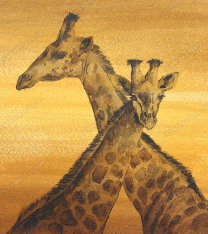 """<span style=""""float:left"""">Elegant duo – Masai giraffe</span><span style=""""float:right""""><a href=""""http://www.carolbarrett.co.uk/paintings/elegant-duo-masai-giraffe/?from=/african-wildlife-sold/"""">More info »</a></span>"""