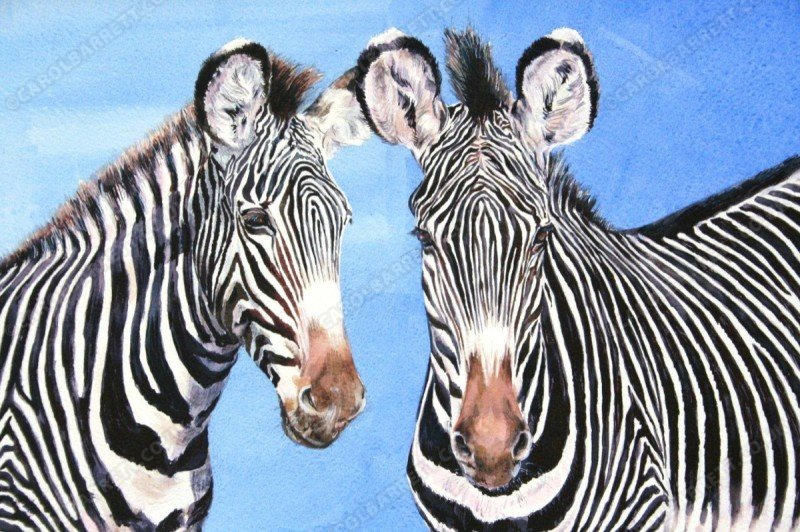 "<span style=""float:left"">Endangered stripes – Grevy's Zebra</span> <span style=""float:right""><a href=""http://www.carolbarrett.co.uk/paintings/endangered-stripes-grevys-zebra/?from=/african-wildlife-sold/"">More info »</a></span>"
