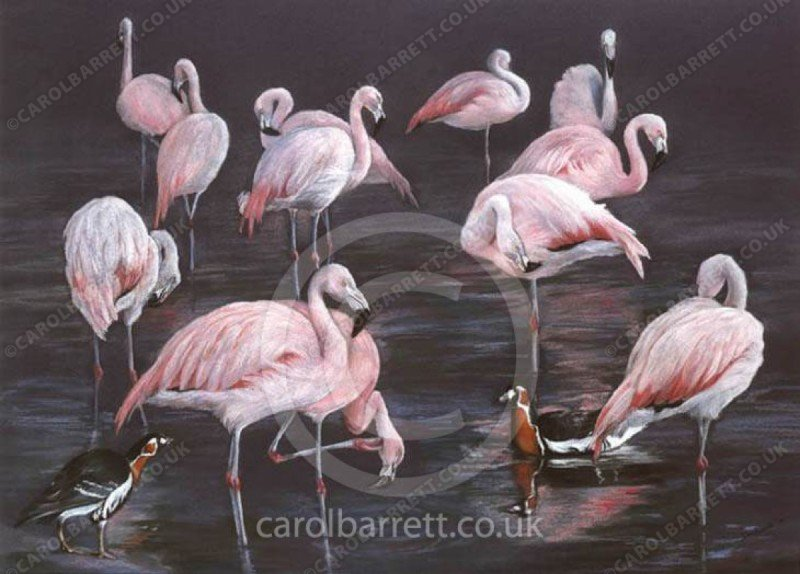 """<span style=""""float:left"""">Flamingo Reflections</span><span style=""""float:right""""><a href=""""http://www.carolbarrett.co.uk/paintings/flamingo-reflections/?from=/birds-sold/"""">More info »</a></span>"""