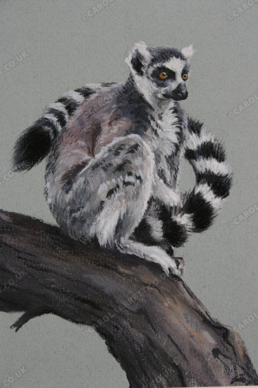 "<span style=""float:left"">Fragile Tomorrow (ring-tailed lemur)</span> <span style=""float:right""><a href=""http://www.carolbarrett.co.uk/paintings/fragile-tomorrow-ring-tailed-lemur/?from=/primates-sold/"">More info »</a></span>"