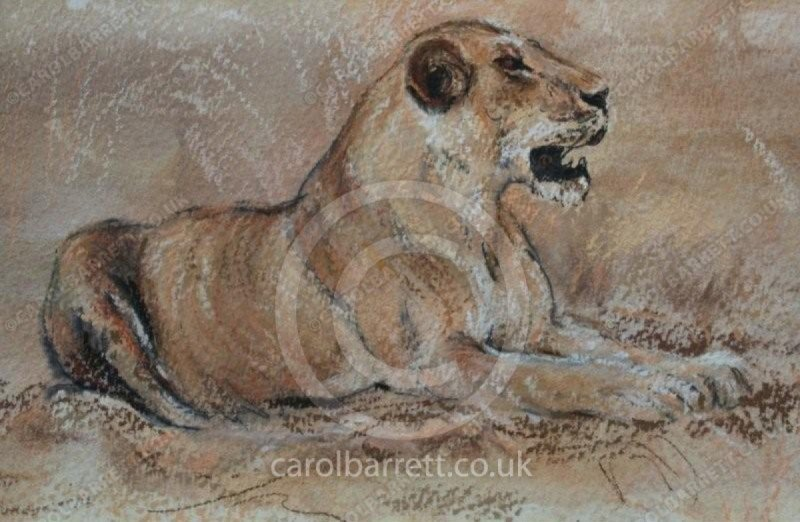 "<span style=""float:left"">Golden huntress</span> <span style=""float:right""><a href=""http://www.carolbarrett.co.uk/paintings/golden-huntress/?from=/big-cats-sold/"">More info »</a></span>"
