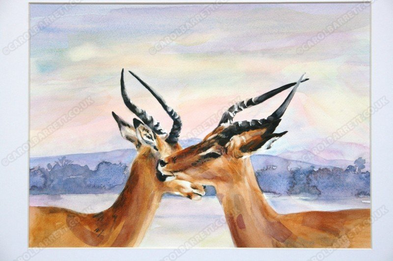 """<span style=""""float:left"""">Grooming bucks</span><span style=""""float:right""""><a href=""""http://www.carolbarrett.co.uk/paintings/grooming-bucks/?from=/african-wildlife-sold/"""">More info »</a></span>"""