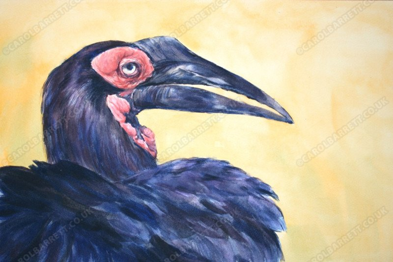 """<span style=""""float:left"""">Ground Hornbill</span><span style=""""float:right""""><a href=""""http://www.carolbarrett.co.uk/paintings/ground-hornbill/?from=/birds-sold/"""">More info »</a></span>"""