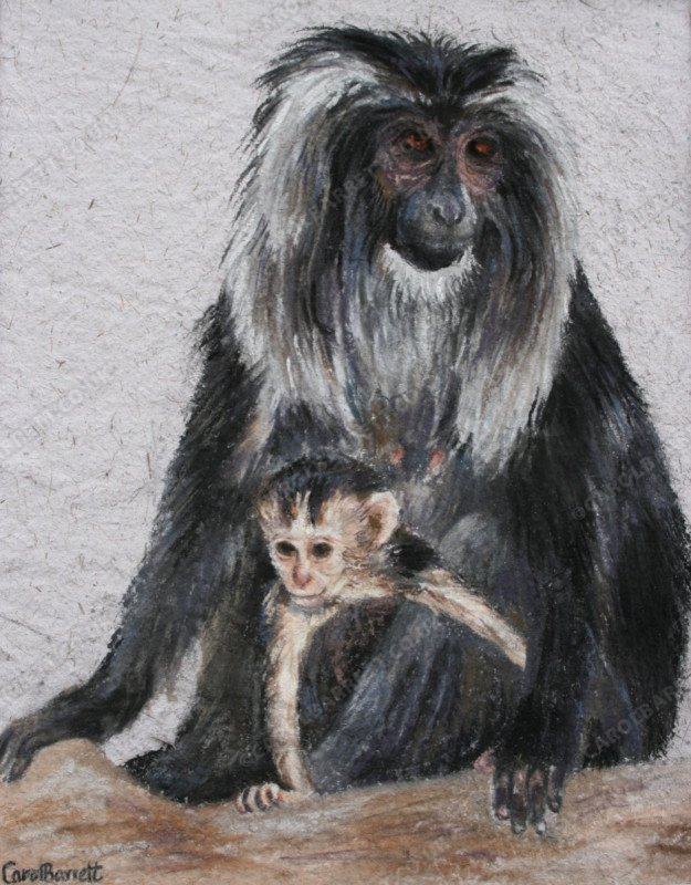 """<span style=""""float:left"""">Handful</span><span style=""""float:right""""><a href=""""http://www.carolbarrett.co.uk/paintings/handful/?from=/primates-for-sale/"""">More info »</a></span>"""
