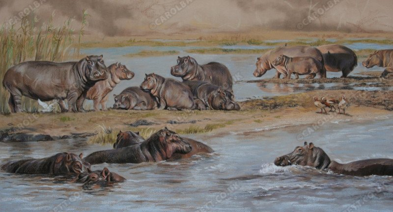 """<span style=""""float:left"""">Hippo pool</span><span style=""""float:right""""><a href=""""http://www.carolbarrett.co.uk/paintings/hippo-pool/?from=/african-wildlife-sold/"""">More info »</a></span>"""
