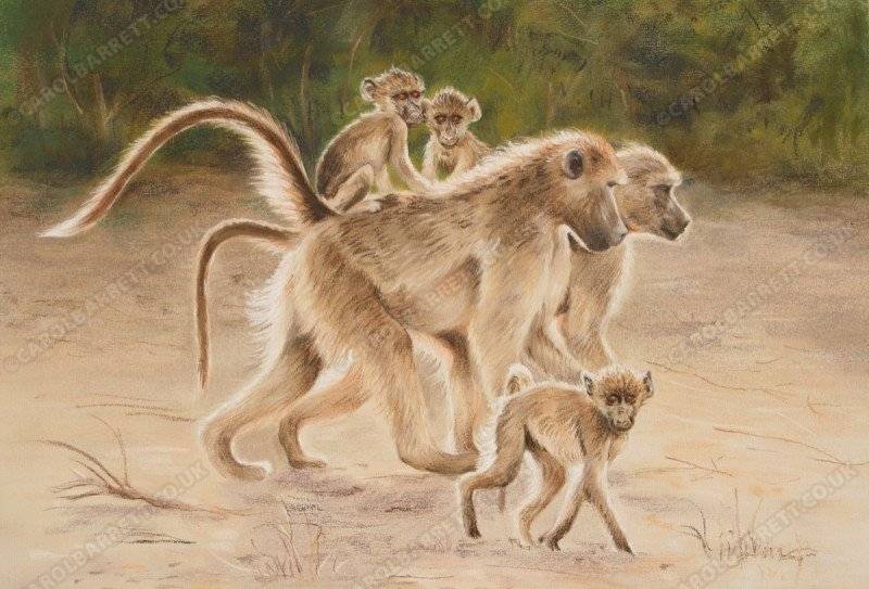 "<span style=""float:left"">Hitching a Ride (chacma baboon)</span> <span style=""float:right""><a href=""http://www.carolbarrett.co.uk/paintings/hitching-a-ride-chacma-baboon/?from=/primates-sold/"">More info »</a></span>"