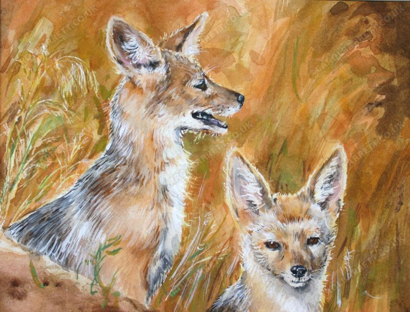"""<span style=""""float:left"""">Jackel den</span><span style=""""float:right""""><a href=""""http://www.carolbarrett.co.uk/paintings/jackel-den/?from=/african-wildlife-sold/"""">More info »</a></span>"""