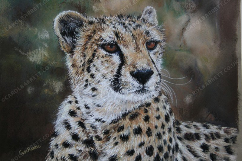 """<span style=""""float:left"""">Leia</span><span style=""""float:right""""><a href=""""http://www.carolbarrett.co.uk/paintings/leia/?from=/cheetah-sold/"""">More info »</a></span>"""