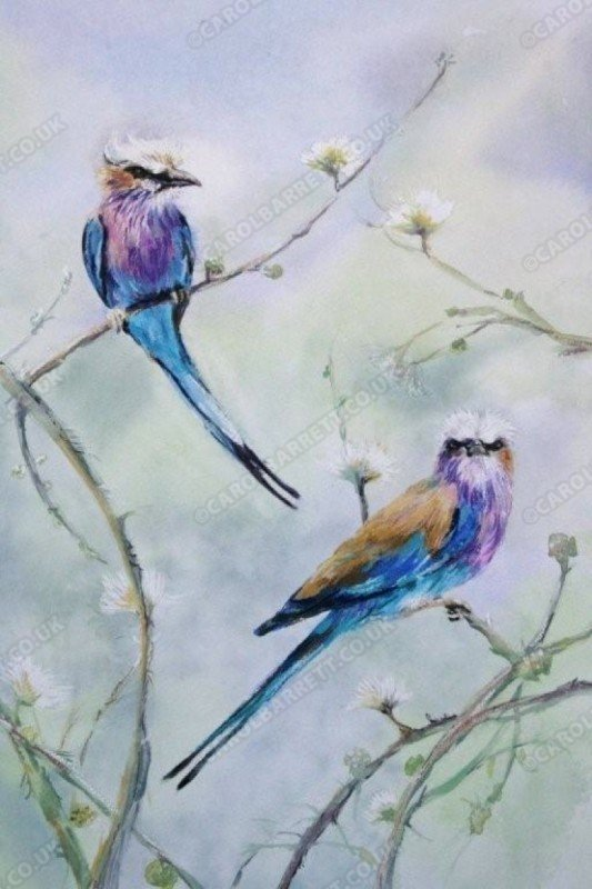 """<span style=""""float:left"""">Lilac-breasted Roller</span><span style=""""float:right""""><a href=""""http://www.carolbarrett.co.uk/paintings/lilac-breasted-roller/?from=/birds-sold/"""">More info »</a></span>"""