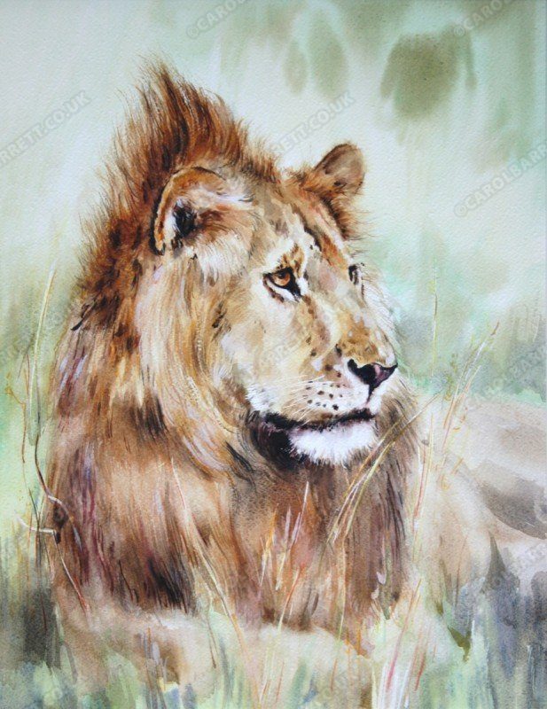 "<span style=""float:left"">Lion-heart</span> <span style=""float:right""><a href=""http://www.carolbarrett.co.uk/paintings/lion-heart/?from=/big-cats-sold/"">More info »</a></span>"