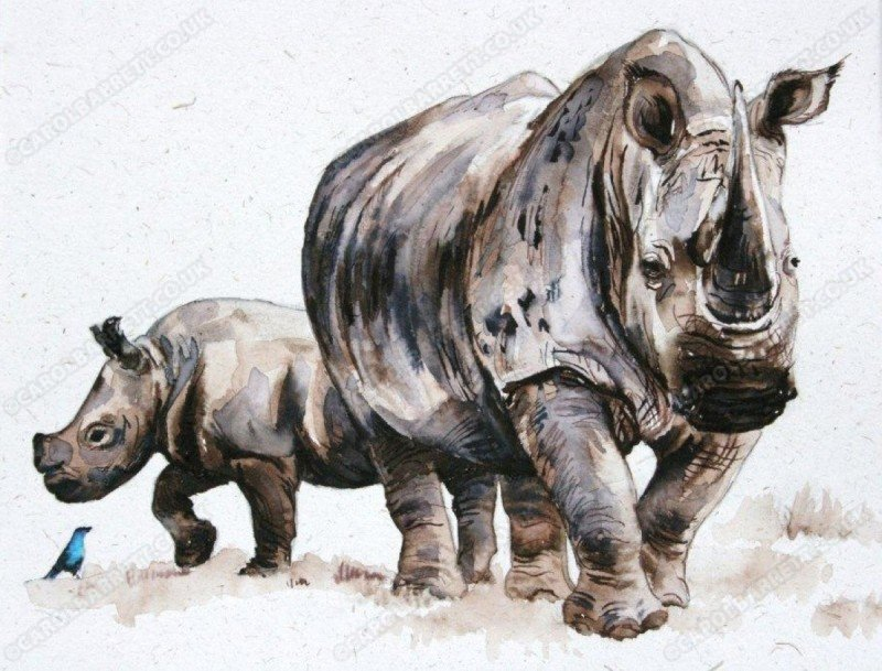 """<span style=""""float:left"""">Little and Large – White Rhino and Glossy Starling</span><span style=""""float:right""""><a href=""""http://www.carolbarrett.co.uk/paintings/little-and-large-white-rhino-and-glossy-starling/?from=/african-wildlife-sold/"""">More info »</a></span>"""