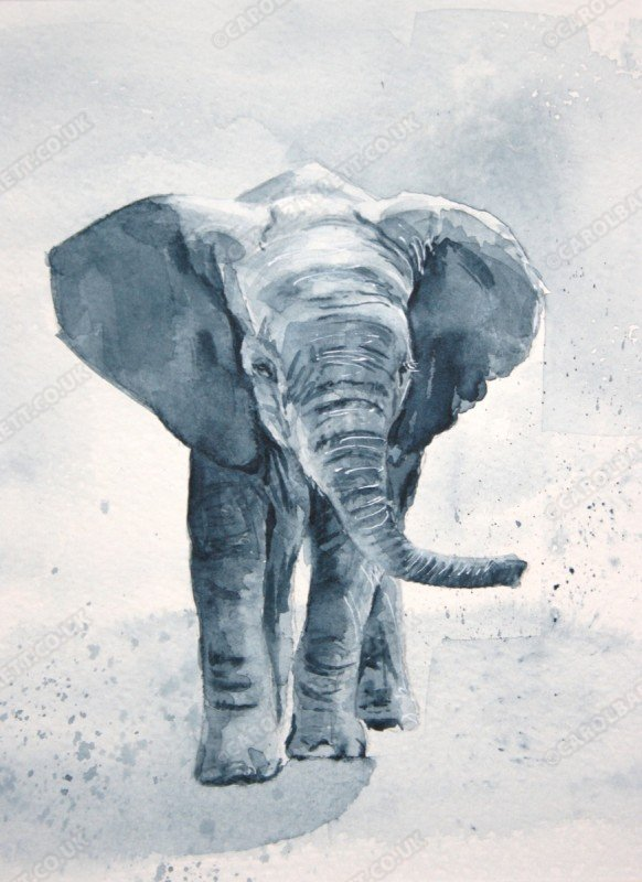 """<span style=""""float:left"""">Little Tembo</span><span style=""""float:right""""><a href=""""http://www.carolbarrett.co.uk/paintings/little-tembo/?from=/elephants-sold/"""">More info »</a></span>"""