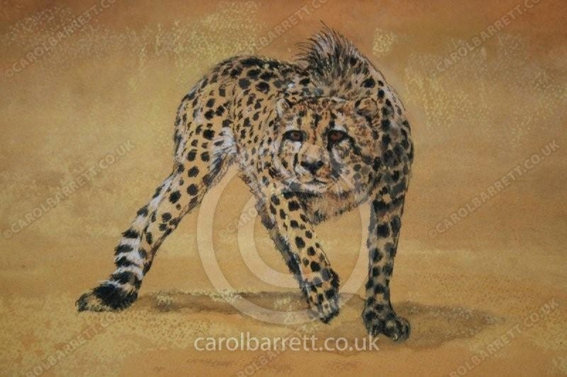 """<span style=""""float:left"""">Losing out</span><span style=""""float:right""""><a href=""""http://www.carolbarrett.co.uk/paintings/losing-out/?from=/cheetah-sold/"""">More info »</a></span>"""