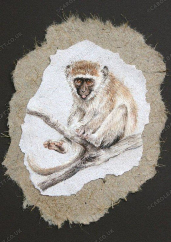 "<span style=""float:left"">Mischief maker – Vervet monkey</span> <span style=""float:right""><a href=""http://www.carolbarrett.co.uk/paintings/mischief-maker-vervet-monkey/?from=/primates-sold/"">More info »</a></span>"