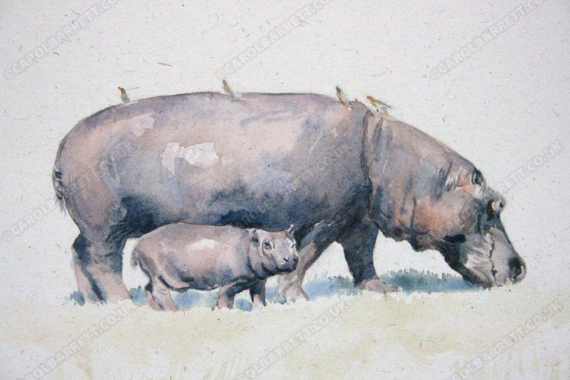 """<span style=""""float:left"""">New born hippo</span><span style=""""float:right""""><a href=""""http://www.carolbarrett.co.uk/paintings/new-born-hippo/?from=/african-wildlife-sold/"""">More info »</a></span>"""
