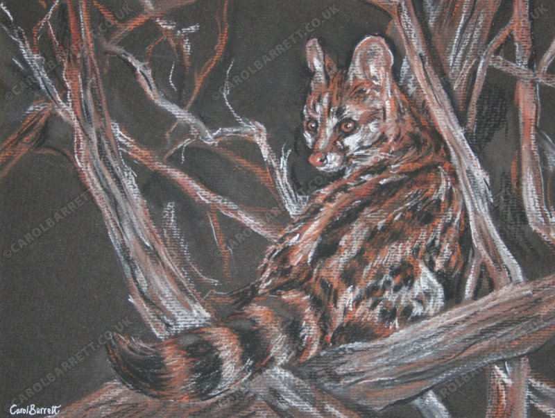 """<span style=""""float:left"""">Night Genet</span><span style=""""float:right""""><a href=""""http://www.carolbarrett.co.uk/paintings/night-genet/?from=/african-wildlife-sold/"""">More info »</a></span>"""