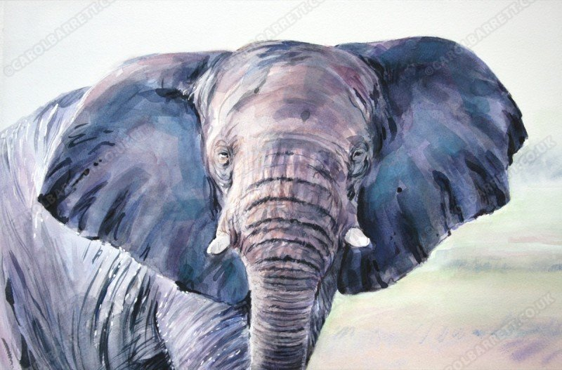 """<span style=""""float:left"""">Power of Wisdom</span><span style=""""float:right""""><a href=""""http://www.carolbarrett.co.uk/paintings/power-of-wisdom/?from=/elephants-sold/"""">More info »</a></span>"""