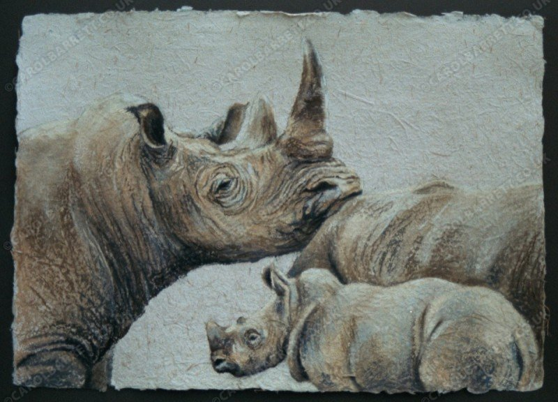"""<span style=""""float:left"""">Prolific Pair – Kruger and Umfulozi with Kei (white rhino)</span><span style=""""float:right""""><a href=""""http://www.carolbarrett.co.uk/paintings/prolific-pair-kruger-and-umfulozi-with-kei-white-rhino/?from=/african-wildlife-sold/"""">More info »</a></span>"""