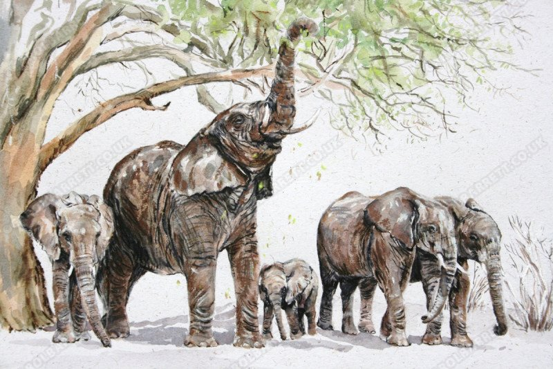 """<span style=""""float:left"""">Reach</span><span style=""""float:right""""><a href=""""http://www.carolbarrett.co.uk/paintings/reach/?from=/elephants-sold/"""">More info »</a></span>"""