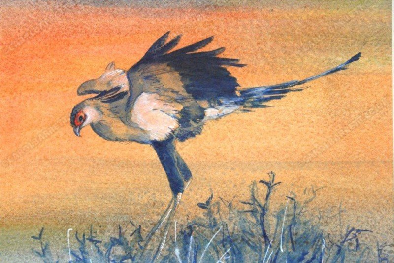 "<span style=""float:left"">Roosting Secretarybird</span> <span style=""float:right""><a href=""http://www.carolbarrett.co.uk/paintings/roosting-secretarybird-2/?from=/birds-for-sale/"">More info »</a></span>"