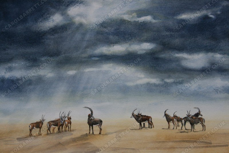 """<span style=""""float:left"""">Sable's harem</span><span style=""""float:right""""><a href=""""http://www.carolbarrett.co.uk/paintings/sables-harem/?from=/african-wildlife-sold/"""">More info »</a></span>"""