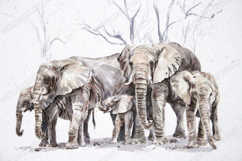 """<span style=""""float:left"""">Scarce shade</span><span style=""""float:right""""><a href=""""http://www.carolbarrett.co.uk/paintings/scarce-shade/?from=/elephants-sold/"""">More info »</a></span>"""