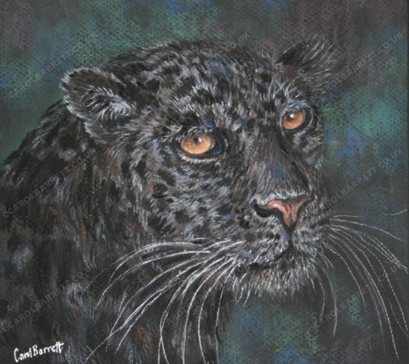 "<span style=""float:left"">Dark (black leopard)</span> <span style=""float:right""><a href=""http://www.carolbarrett.co.uk/paintings/dark-black-leopard/?from=/big-cats-sold/"">More info »</a></span>"