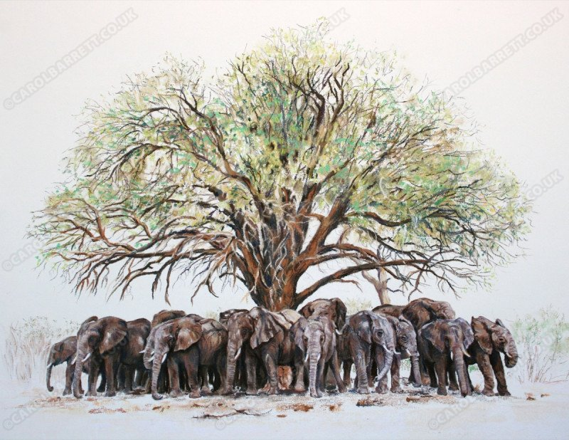 """<span style=""""float:left"""">Shady tree</span><span style=""""float:right""""><a href=""""http://www.carolbarrett.co.uk/paintings/shady-tree/?from=/elephants-sold/"""">More info »</a></span>"""