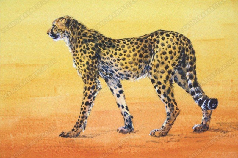 """<span style=""""float:left"""">Spotted feline</span><span style=""""float:right""""><a href=""""http://www.carolbarrett.co.uk/paintings/spotted-feline/?from=/cheetah-sold/"""">More info »</a></span>"""