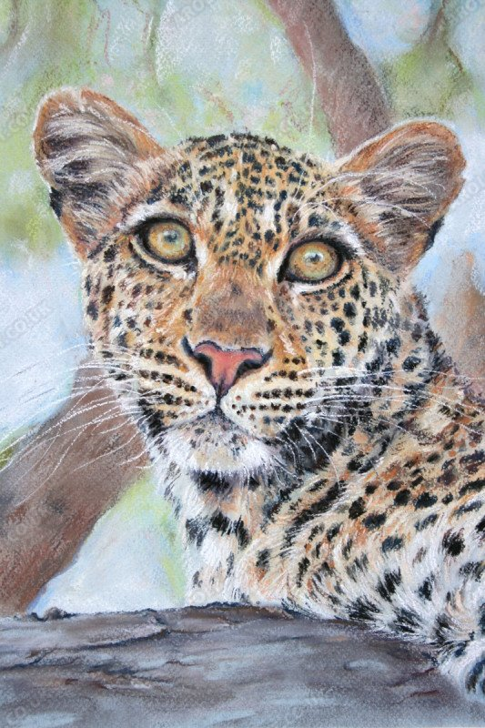 "<span style=""float:left"">Starlet Leopard</span> <span style=""float:right""><a href=""http://www.carolbarrett.co.uk/paintings/starlet-leopard/?from=/big-cats-sold/"">More info »</a></span>"