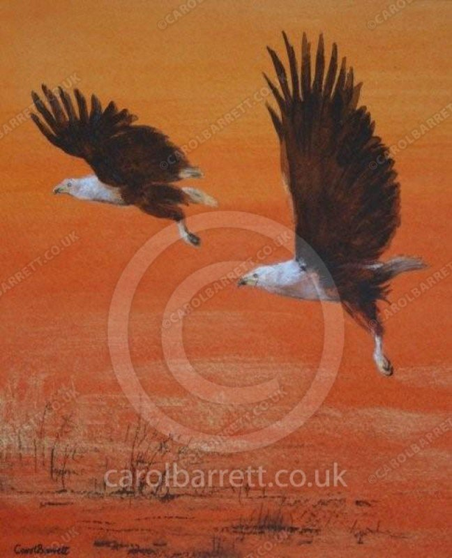 """<span style=""""float:left"""">Sunset patrol</span><span style=""""float:right""""><a href=""""http://www.carolbarrett.co.uk/paintings/sunset-patrol/?from=/birds-sold/"""">More info »</a></span>"""