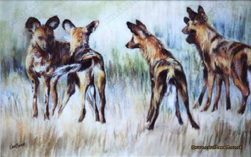 "<span style=""float:left"">The Meeting (painted wolves)</span> <span style=""float:right""><a href=""http://www.carolbarrett.co.uk/paintings/the-meeting-painted-wolves/?from=/wild-dog-and-hyena-sold/"">More info »</a></span>"
