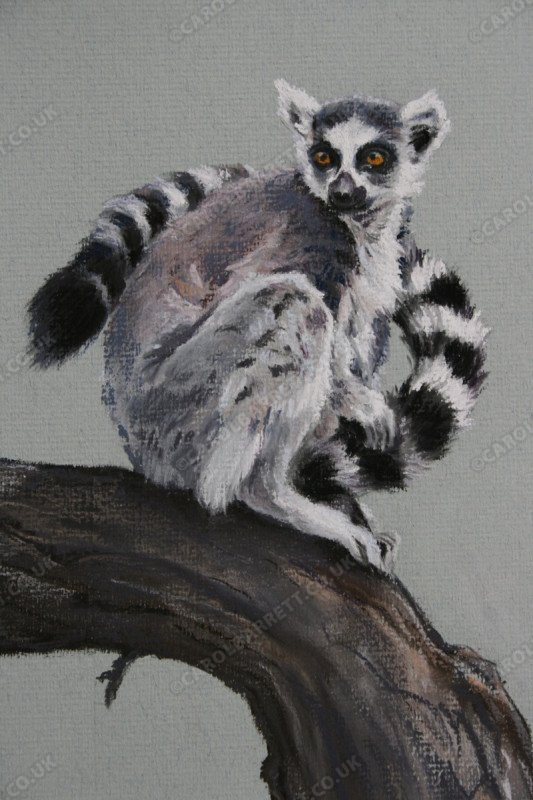 "<span style=""float:left"">Uncertain Future (ring-tailed lemur)</span> <span style=""float:right""><a href=""http://www.carolbarrett.co.uk/paintings/uncertain-future-ring-tailed-lemur/?from=/primates-sold/"">More info »</a></span>"