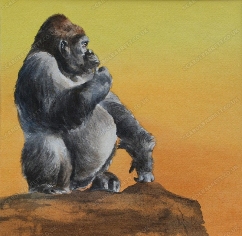 "<span style=""float:left"">Vanishing Kingdom (male gorilla)</span> <span style=""float:right""><a href=""http://www.carolbarrett.co.uk/paintings/vanishing-kingdom-male-gorilla/?from=/primates-sold/"">More info »</a></span>"