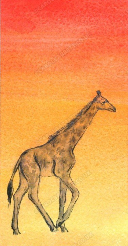 "<span style=""float:left"">Walking tall (Masai giraffe)</span> <span style=""float:right""><a href=""http://www.carolbarrett.co.uk/paintings/walking-tall-masai-giraffe-2/?from=/african-wildlife-for-sale/"">More info »</a></span>"